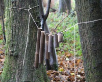 Forest panpipes